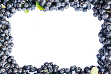 Fresh chokeberry background (Aronia melanocarpa) isolated on white with copy space for yours text.