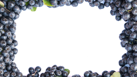 Fresh chokeberry background or Aronia melanocarpa isolated on white with copy space for yours text. Design element.