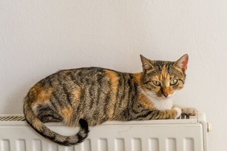 domestic cat relaxing on a warm radiator Standard-Bild
