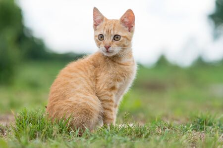 Portrait of cute young striped cat, sitting on the grass. Shallow depth of filed. Standard-Bild - 132368988