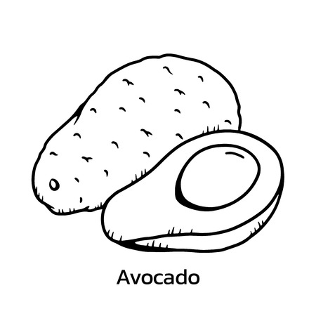 Avocado vector illustration.Avocado line drawing 向量圖像