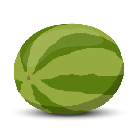 Watermelon vector illustration. Single full watermelon 向量圖像