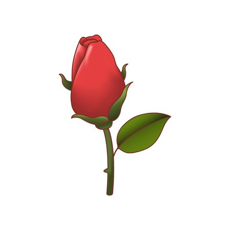 Red rose isolated. Vector illustration