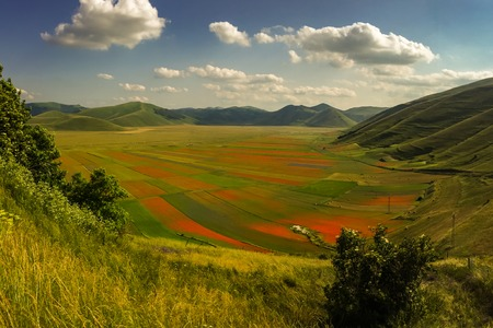 Bright red swathes of poppies and other wildflowers line the beautiful valley floor looking down from the town of Castelluccio, Umbria, Italy,