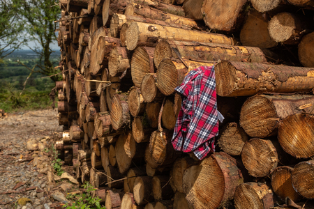 A plaid shirt placed on a pile of freshly cut trees striped of branches and prepared for the saw mill part of the logging industry in Ireland, nobody in the image