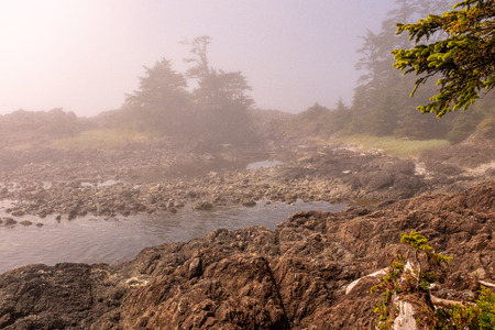 Fog envelops the rugged Wild Pacific Rim Trail at Ucluelet, on the Ucluelet Peninsula on the west coast of Vancouver Island in British Columbia, Canada, nobody in the image