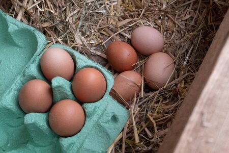 A close up of a collection of brown free range chickens eggs, 4 in a box and 4 still to be collected sitting on a bed of straw.