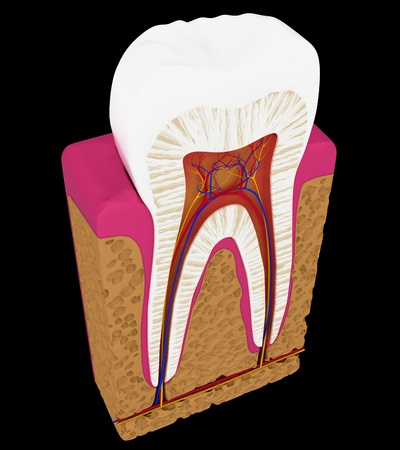 root canal: Tooth cut or section isolated over black background Stock Photo