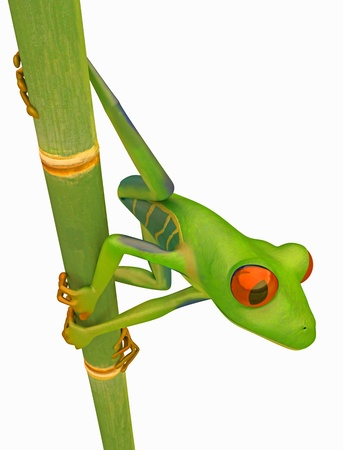 Green Red eyed tree frog on bamboo stem isolated over white Stock Photo