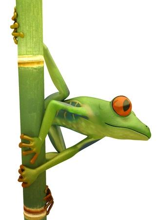 Red eyed treefrog on bamboo isolated over white photo