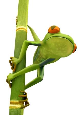 Tree frog on bamboo bole isolated over white background