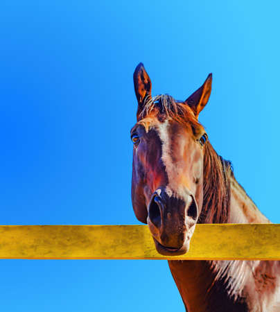 Domestic horse behind a yellow fence against the blue sky.