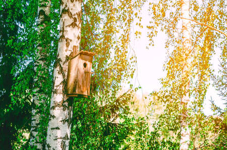 Old birdhouse on a birch among green leaves.