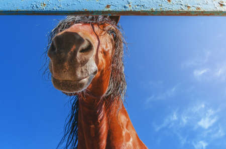 Cute horse, head, looking down at camera on background of blue sky. Foto de archivo