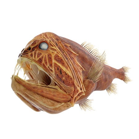 deep water: Fangtooth Fish Isolated on White Background 3D Illustration Stock Photo