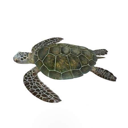 緑の海カメ、白で隔離 3 D イラストレーションの背景 写真素材