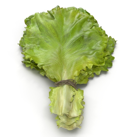 Lettuce Leaf Bunch on white. Front view. 3D illustration