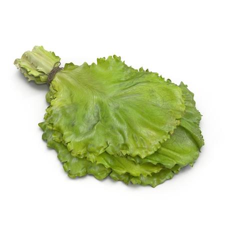 Lettuce Leaf Bunch on white. 3D illustration