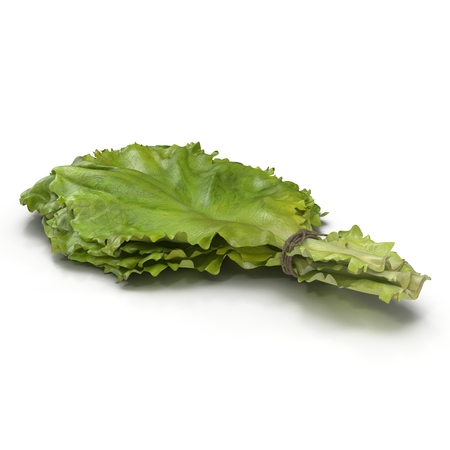 leaf lettuce: Lettuce Leaf Bunch on white. 3D illustration