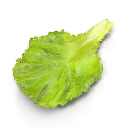 leaf lettuce: Lettuce Leaf on white. 3D illustration Stock Photo