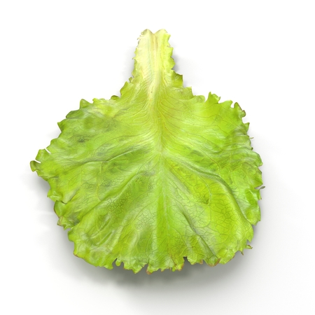 leaf lettuce: Lettuce Leaf on white. Front view. 3D illustration