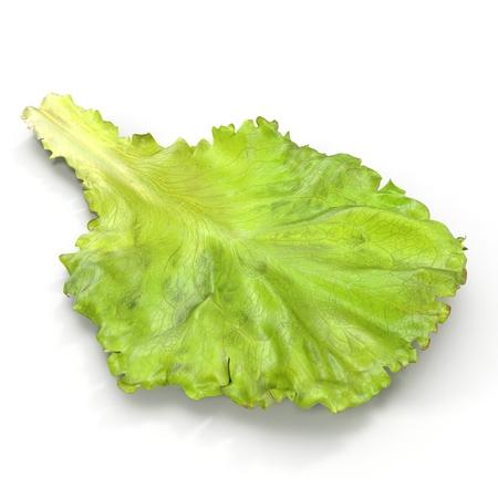 Lettuce Leaf on white. 3D illustration Stock Photo