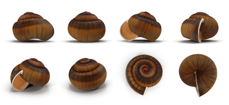 single empty snail shell renders set from different angles on a white. 3D illustration