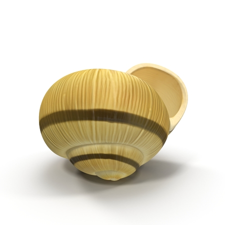 Spiral shell isolated on white. 3D illustration