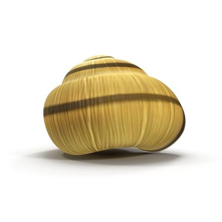 Snail Shell on white. 3D illustration Stock Photo