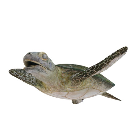 Green Sea Turtle isolated on white. 3D illustration
