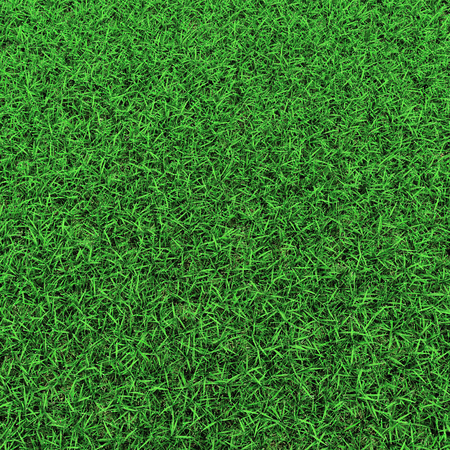 Grass on white. 3D illustration