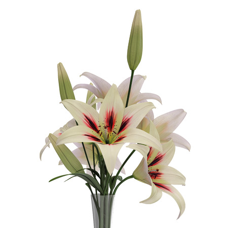 White Lily Vase On White 3d Illustration Stock Photo Picture And