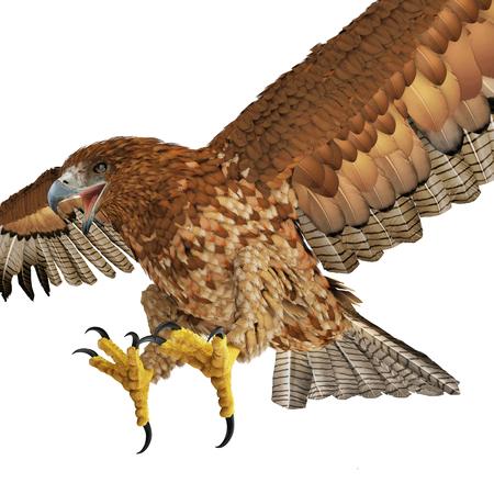 Gurney Eagle on white background. 3D illustration Stock Photo