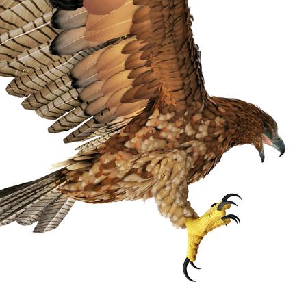 Gurney Eagle on white background. Side view. 3D illustration Stock Photo