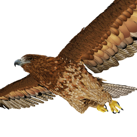 gurney: Gurney Eagle on white background. 3D illustration Stock Photo