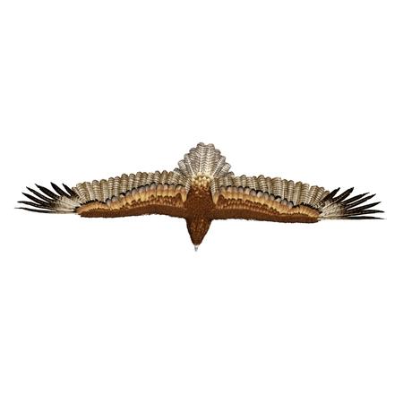 Gurney Eagle on white background. Top view. 3D illustration