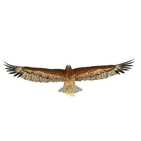 Gurney Eagle on white background. Front view. 3D illustration Stock Photo