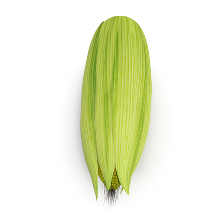 sweetcorn: Corn isolated on a white. 3D illustration
