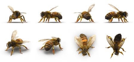 Bee renders set from different angles on a white. 3D illustration