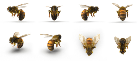 insect honey bee. Renders set from different angles on a white. 3D illustration