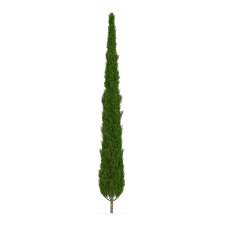Cypress Tree on white. 3D illustration Imagens - 83366866