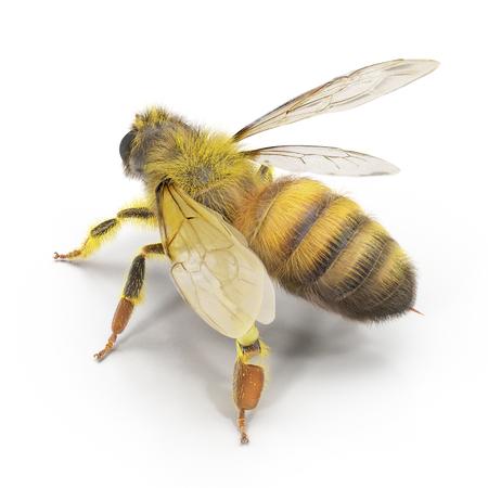 꿀벌에 흰색을 격리합니다. 3D 일러스트 레이션