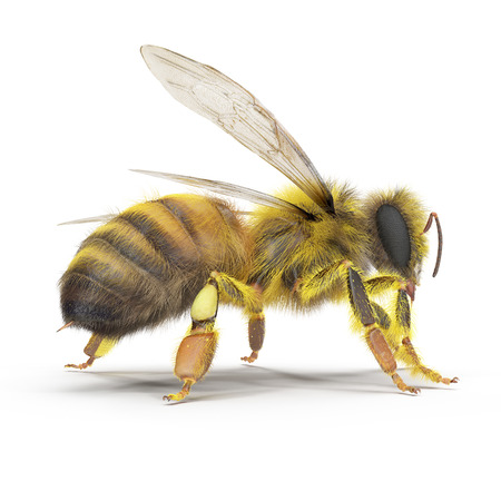 Bee isolated on the white. 3D illustration