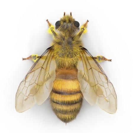 Insect honingbij geïsoleerd op wit. 3D illustratie Stockfoto