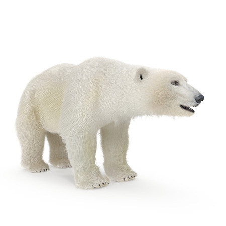 Large male Polar Bear on a white. 3D illustration Фото со стока