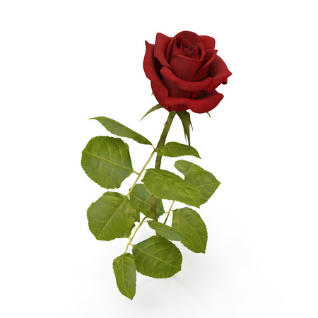 Single beautiful red rose isolated on white background. 3D illustration Stock Photo