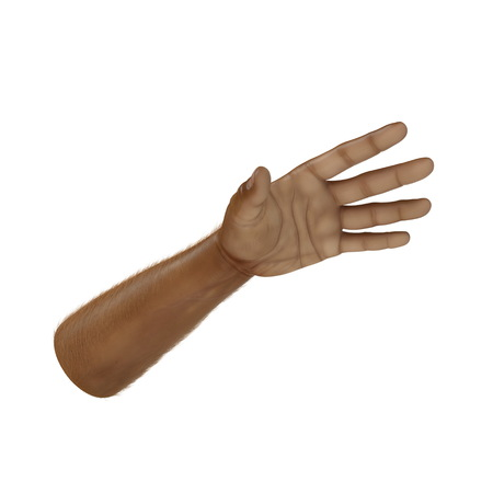 Man Hands Swarthy Skin on white. 3D illustration