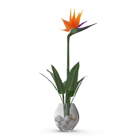 Bird of Paradise Flower in Glass Vase on a white. 3D illustration Stock Photo