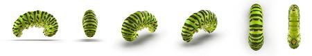 アゲハチョウの幼虫やキアゲハ、白に、違った角度からのセットをレンダリングします。3 D イラストレーション