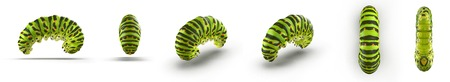 Swallowtail caterpillar or Papilio Machaon renders set from different angles on a white. 3D illustration Stock Photo